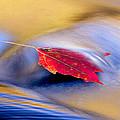 Maple Stream by Ron Jones