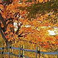 Maple Trees And A Rail Fence In Autumn by David Chapman