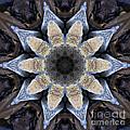 Marbled Mandala - Abstract Art by Carol Groenen