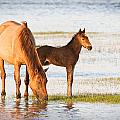 Mare And Foal by Bob Decker