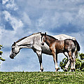 Mare And Foal by Steve Purnell