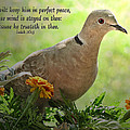 Marigold Dove With Verse by Debbie Portwood