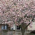 Marinette Magnolia by Mark J Seefeldt