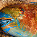 Market Fresh Fish by Chris Anderson
