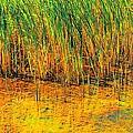 Marsh Colors  by Beth Akerman