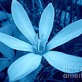 Marsh Grass Flower In Blue by Renee Trenholm