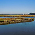 Marsh In Maine by Nancy Griswold