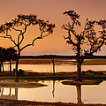 Marsh Morning by Phill Doherty