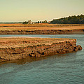 Marsh Of Pine Point by Nancy Griswold