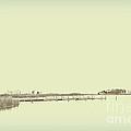 Marsh Rev5 by Paulette B Wright