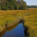 Marsh Water by Nancy Griswold