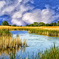 Marshlands On Isle Of Palms by Dominic Piperata