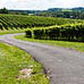 Maryland Vineyard Panorama by Thomas Marchessault