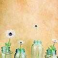 Mason Jars by Stephanie Frey