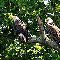 Mating Pair by Randall Branham