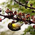 Maui Bird by Marilyn Marchant