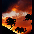 Maui Breeze by Susanne Still