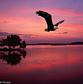 Mauve Sundown Eagle  by Randall Branham