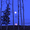 May Moon Through Birches by Francine Frank
