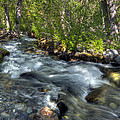 Mcgee Creek California by Dianne Phelps