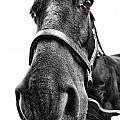 Me So Horsey by Yhun Suarez