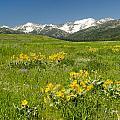 Meadow Landscape by Roderick Bley