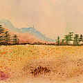Meadow Wildflowers - Watercolor by Heidi Smith