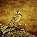 Meadowlark by Lana Trussell