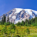 Meadows Meet Glaciers by Greg Norrell