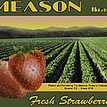 Meason Strawberries by John OBrien