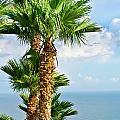 Mediterranean Landscape by Michael Goyberg
