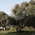 Mediterranean Wood Wiew by Pedro Cardona Llambias