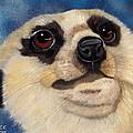 Meerkat Eyes by Debbie LaFrance