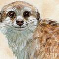 Meerkat 762 by Svetlana Ledneva-Schukina