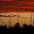 Melaleuca Treetops At Sundown by Ed Gleichman