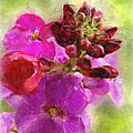 Mellow Magenta by Debbie Portwood