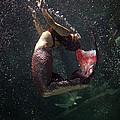 Mermaid by Jessica Yakamna