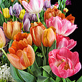 Merry Dresden Style Tulips by Kathy Clark