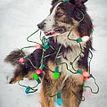 Merry Merry Bark Bark by Joye Ardyn Durham