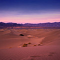 Mesquite Dunes by Tanya Harrison
