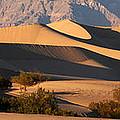 Mesquite Dunes by Vivian Christopher