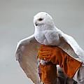 Message Snowy Owl by LeeAnn McLaneGoetz McLaneGoetzStudioLLCcom