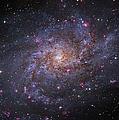 Messier 33, Spiral Galaxy In Triangulum by Robert Gendler