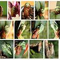 Metamorphosis Of A Cicada by Emanuel Tanjala