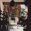 Mexico Garden Patio By Tom Ray by First Star Art