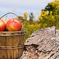 Michigan Apples by Maria Dryfhout