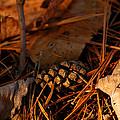 Michigan Golden Sunset Pine Cone by LeeAnn McLaneGoetz McLaneGoetzStudioLLCcom