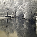 Middle River In Infrared by Dorothy Drobney