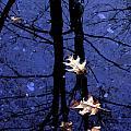 Midnight Stillness by Mike Nellums