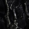 Midnight Tree 3 by David Sanchez
